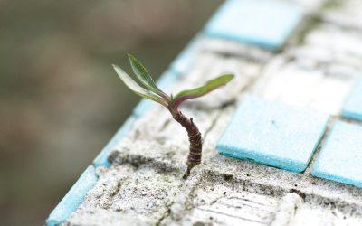 Convertir una crisis en oportunidad, la esperanza para las pymes ante la COVID-19