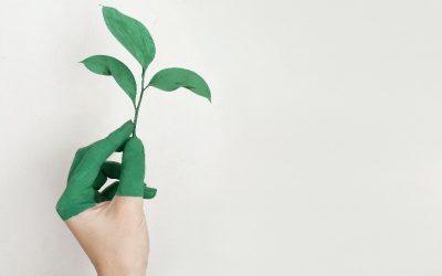 Sustentabilidad en las empresas y su gran oportunidad de negocio