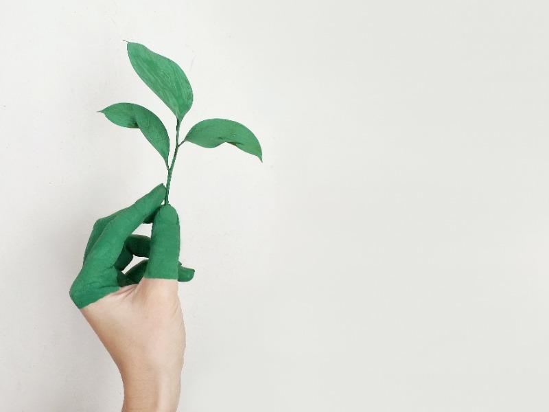 sustentabilidad en las empresas